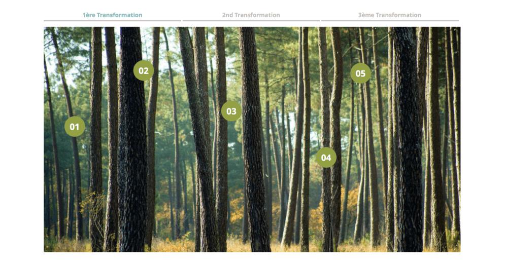 Animation javascript dans le thème du bois et de la forêt
