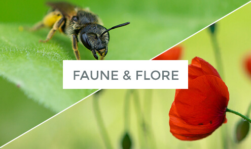 Photographies de Faune & Flore