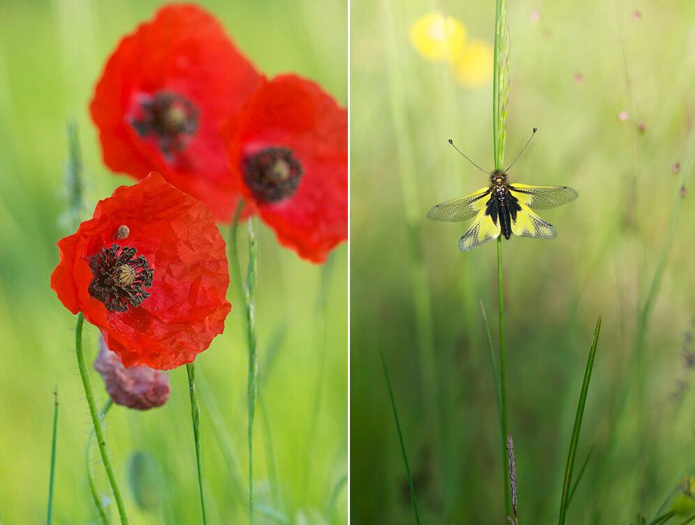 Photo de fleurs et de papillon